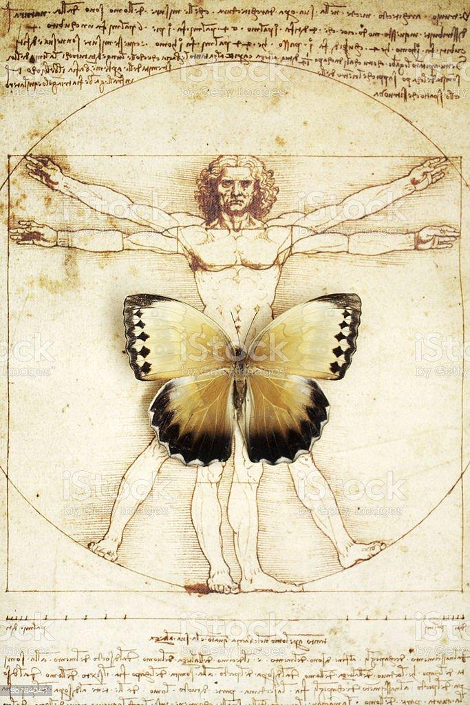 Schmetterling Auf Davinci Skizze Eines Mannes Stock-Fotografie und ...