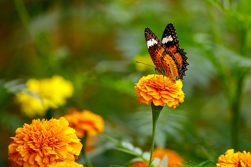 butterfly on flower in the jungle of Cuc Phuong