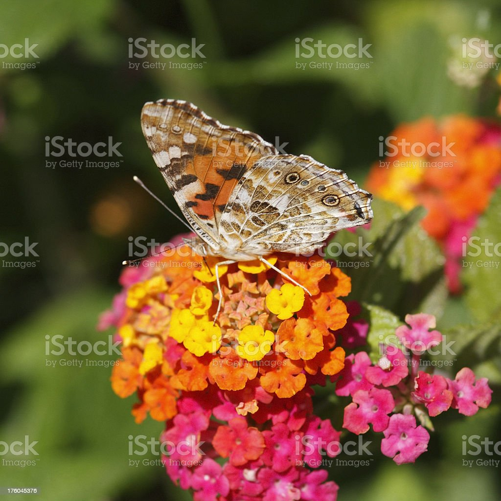 Butterfly on Flower Macro stock photo