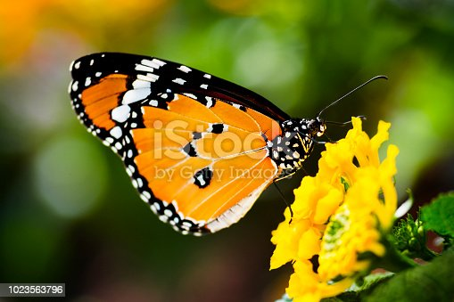 Butterfly on a yellow flowers