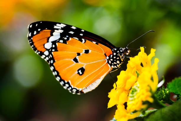 Butterfly on flower picture id1023563796?b=1&k=6&m=1023563796&s=612x612&w=0&h=4lpyawr lkr3cssk8ekchtejmyzged3l6iahlsmnkey=