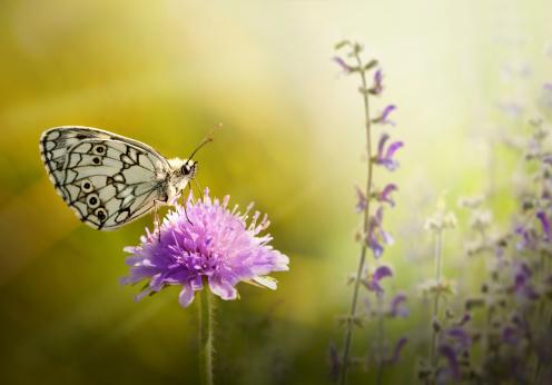 istock Butterfly on flower 171268257