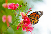 Butterfly on flower in nature