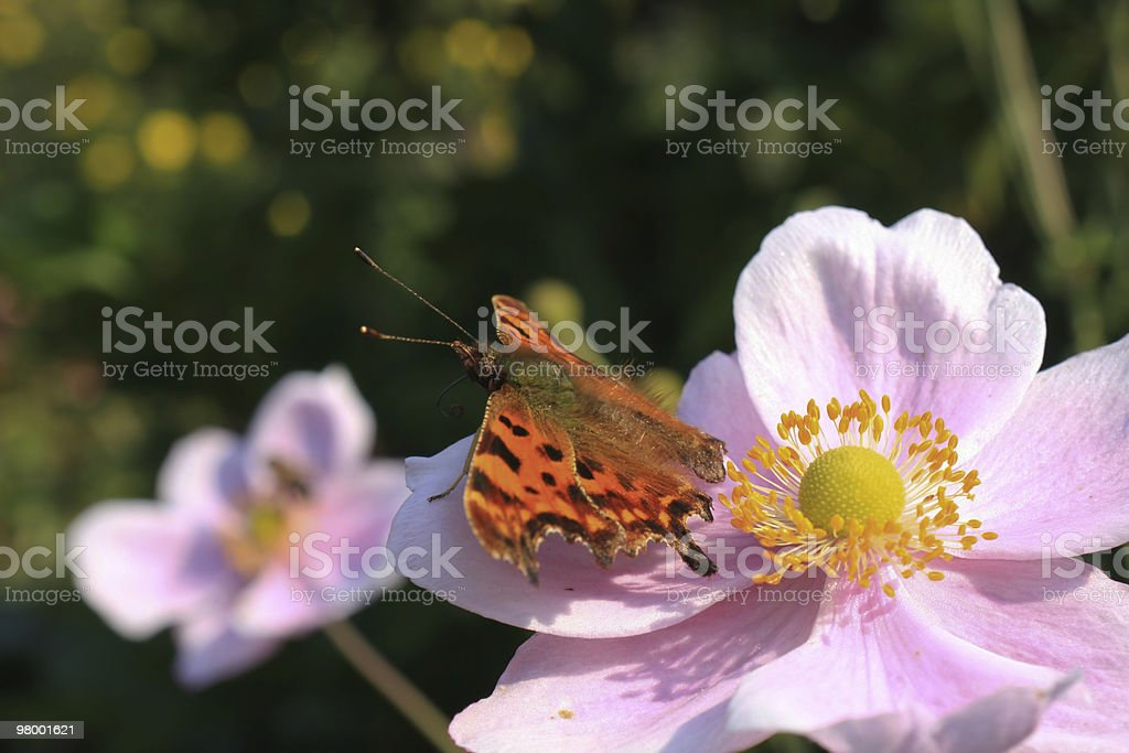 Butterfly on flower royalty-free stock photo