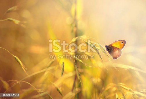 istock Butterfly on grass 469869279