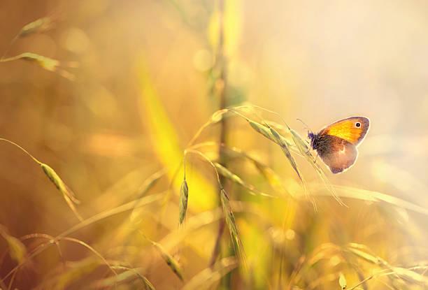 Butterfly on grass picture id469869279?b=1&k=6&m=469869279&s=612x612&w=0&h=c8nhdqond6va1 aaacvltpiym6jxmwxyph c0t6zoka=