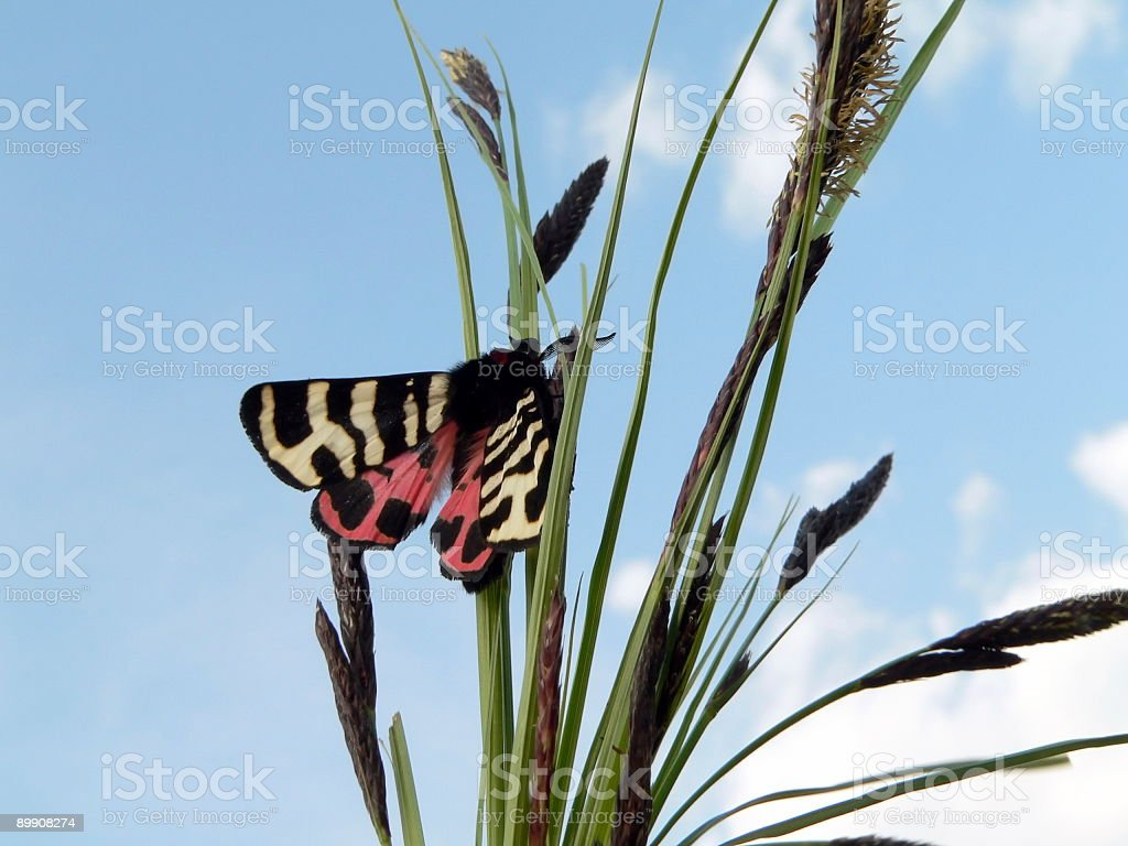 Butterfly on grass royalty-free stock photo