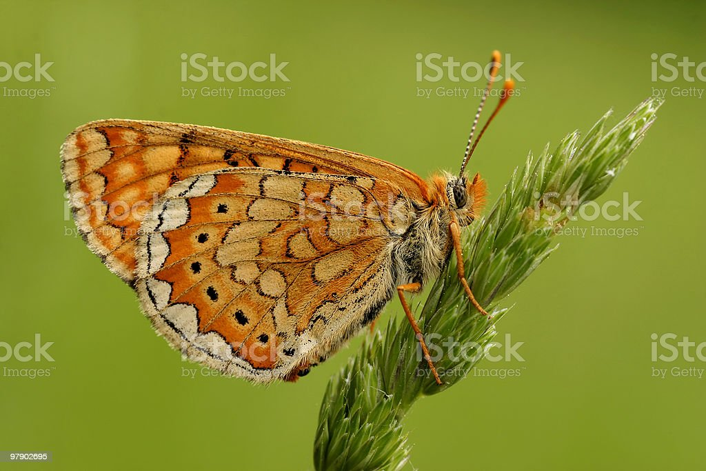 Butterfly on grass. royalty-free stock photo