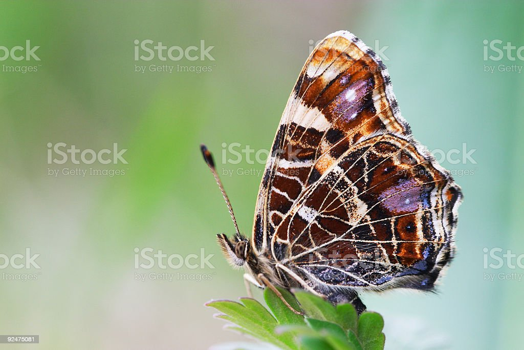 Butterfly on green grass background stock photo