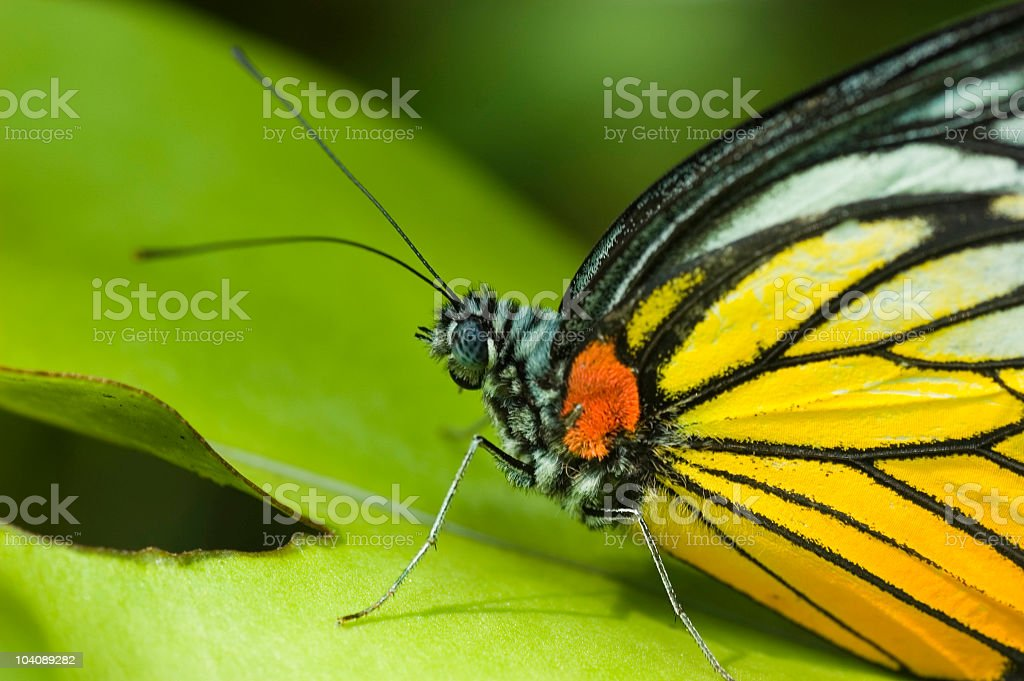 butterfly on green leaf royalty-free stock photo