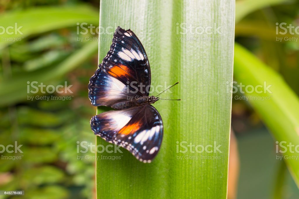 butterfly on green leaf plant stock photo