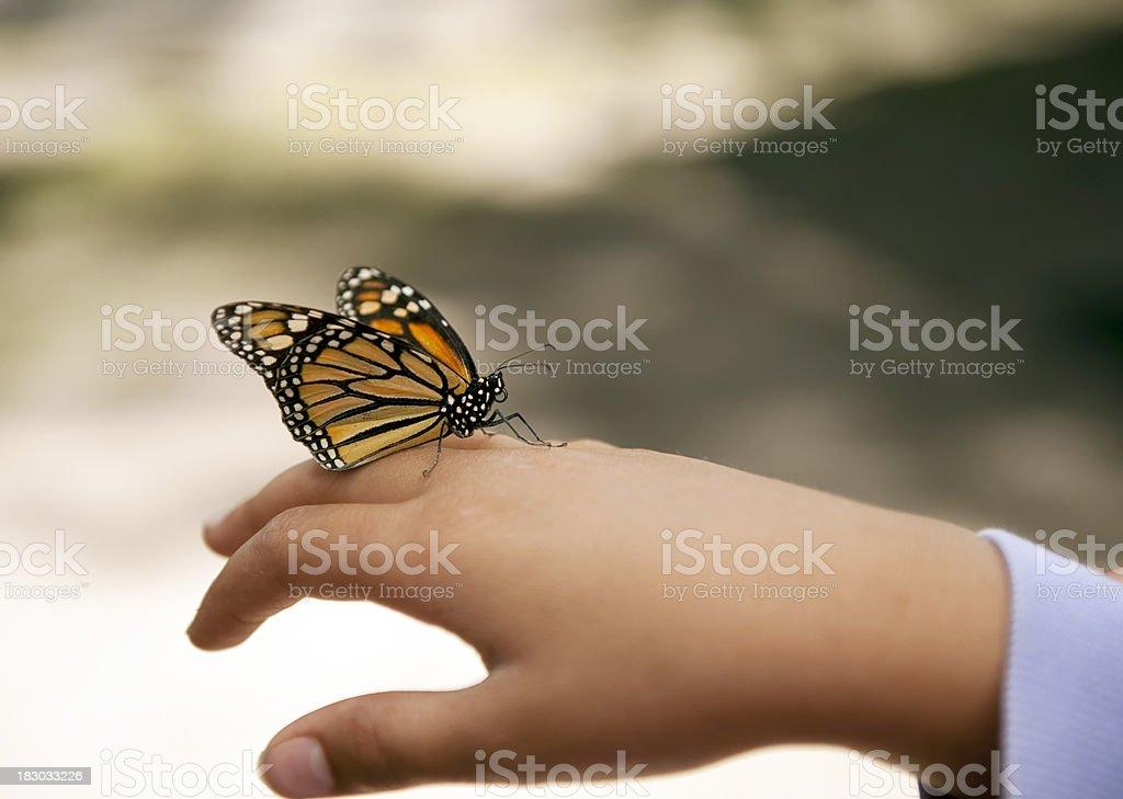 Schmetterling auf Seite – Foto