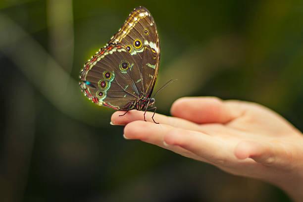 Motyl na rękę – zdjęcie