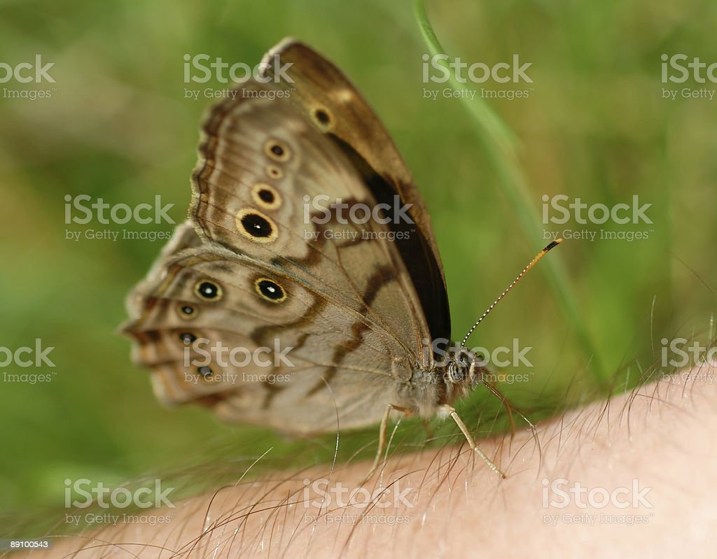Butterfly on My Arm royalty-free stock photo