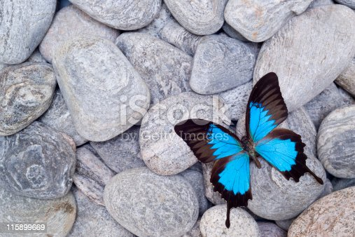 Butterfly on pebbles.