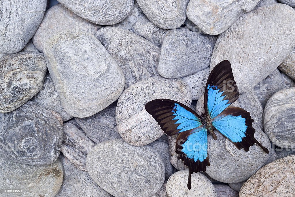 Butterfly on pebbles stock photo