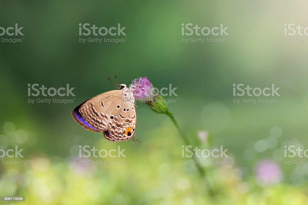 Butterfly on pink flower. stock photo