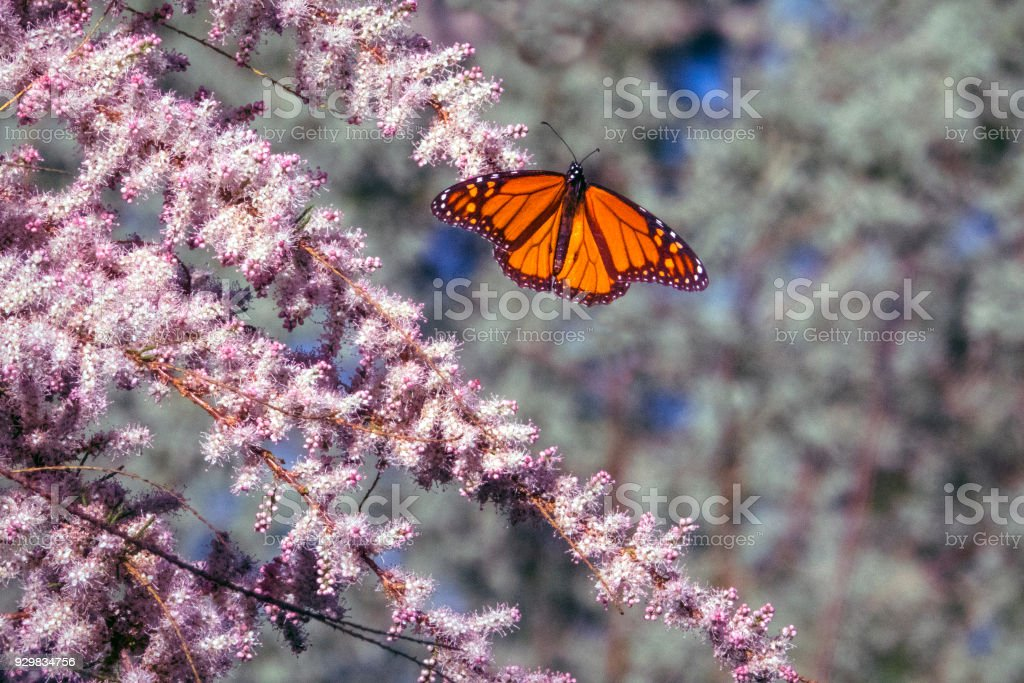 Butterfly on pink stock photo