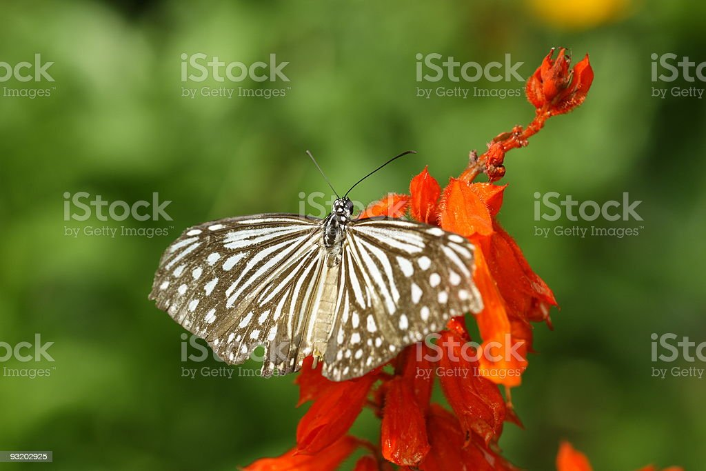 Butterfly on red flower stock photo