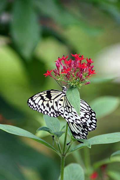 Butterfly on red picture id139391633?b=1&k=6&m=139391633&s=612x612&w=0&h=2j2zx ljue9seq3y6qaubv86r3uvhwfwjzpelkhwmdk=
