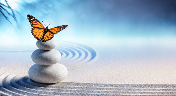 butterfly on spa massage stones in zen garden - armonia foto e immagini stock