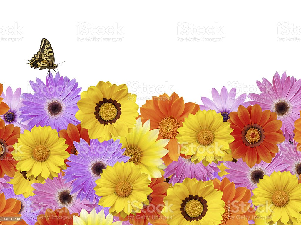 Butterfly on spring flower border stock photo