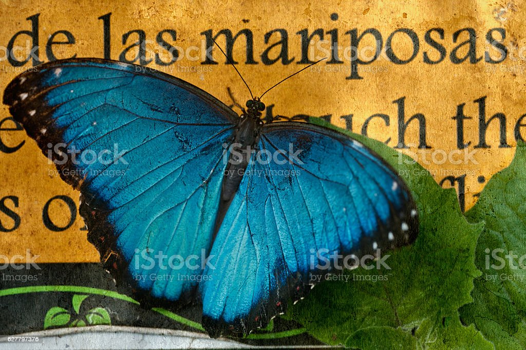 Butterfly on the background of a sign  'butterfly' in Spanish stock photo