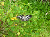 Butterfly on the background of green leaves in Kerala Kochi