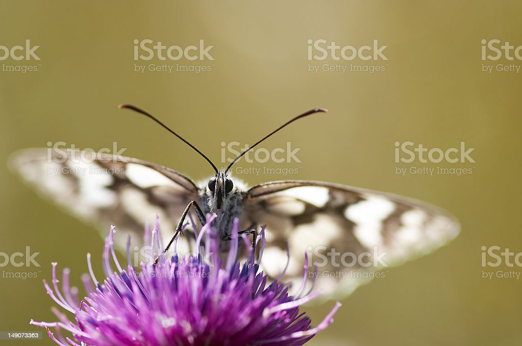 butterfly on the flower royalty-free stock photo