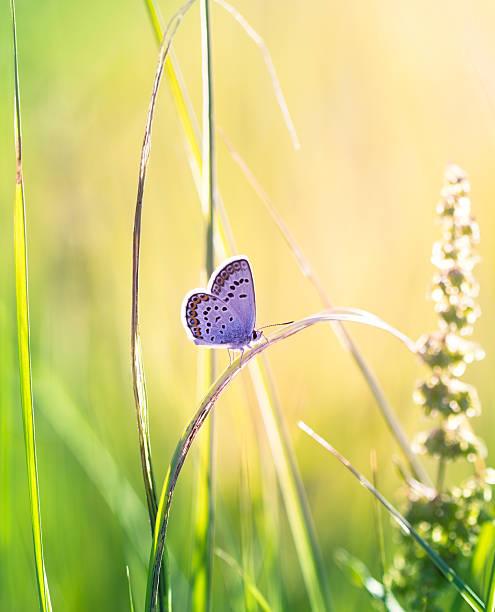 Butterfly on the grass picture id178158454?b=1&k=6&m=178158454&s=612x612&w=0&h=shv0eunkfpjvs1xtqjkk u431crmi9wyujymn748sqm=