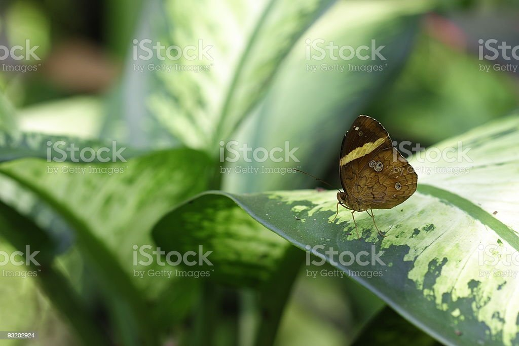 Butterfly on the leaf stock photo