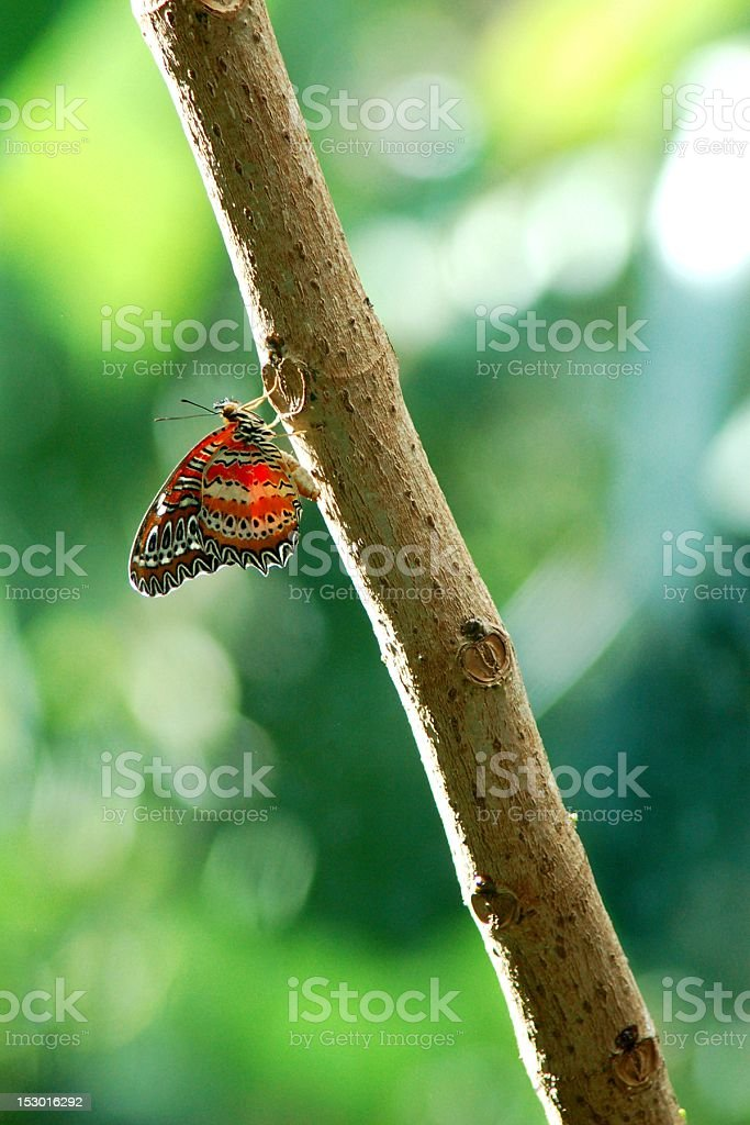 Butterfly on Tree Branch stock photo