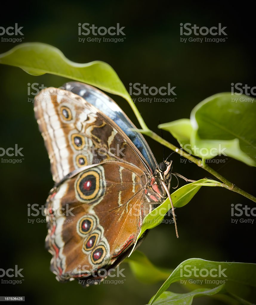 Butterfly on tree royalty-free stock photo