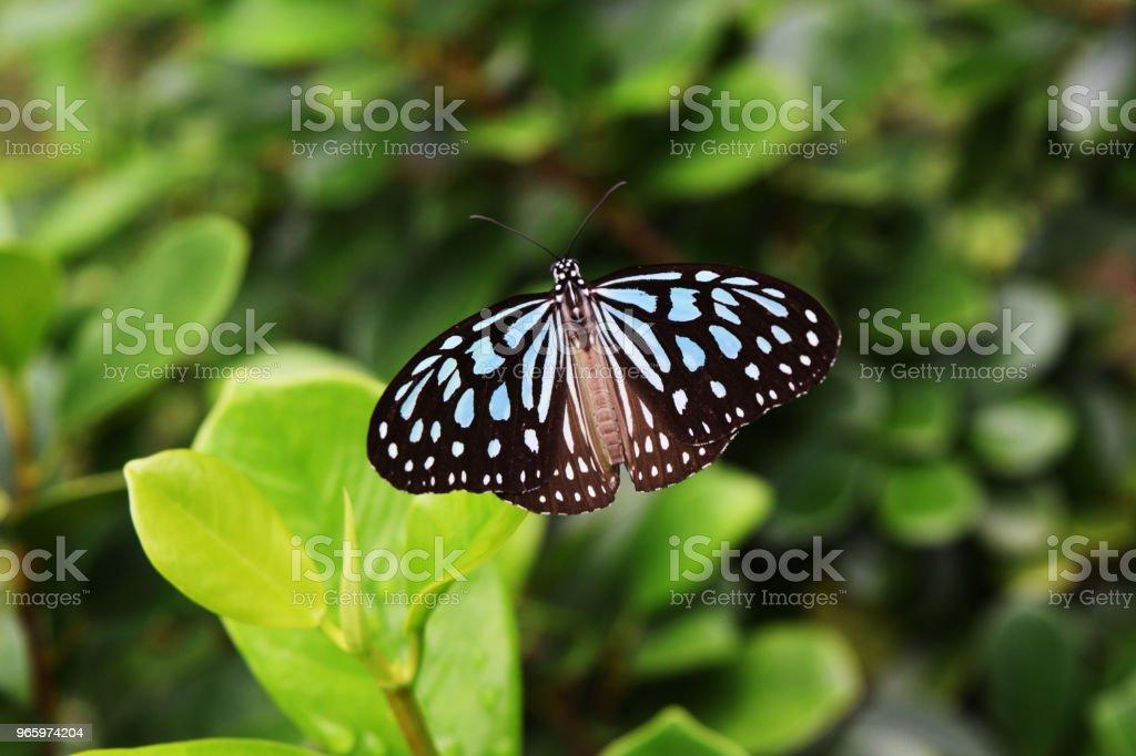 Fjäril på träd - Royaltyfri Antenn - Djurkroppsdel Bildbanksbilder