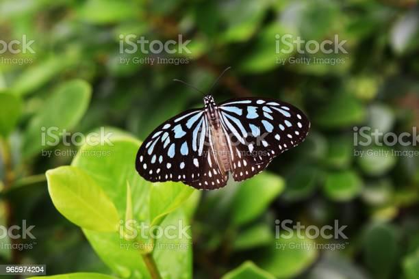 Fjäril På Träd-foton och fler bilder på Antenn - Djurkroppsdel