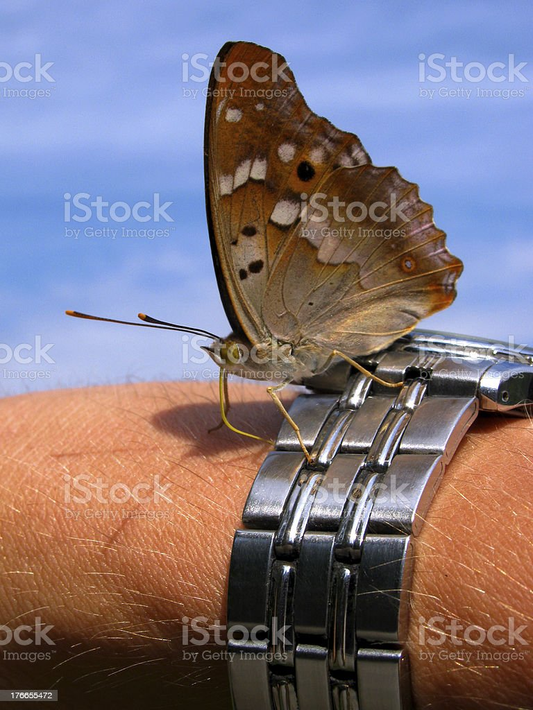 butterfly on watch royalty-free stock photo