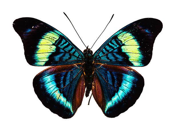 Mariposa sobre fondo blanco - foto de stock