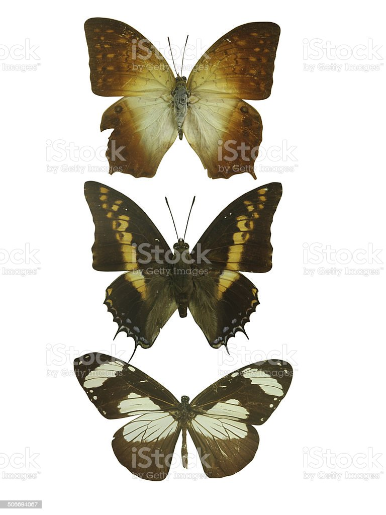 butterfly on white stock photo
