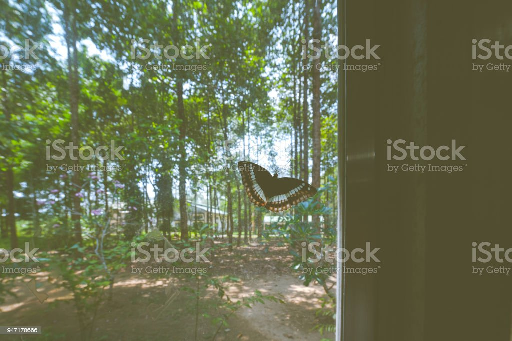 butterfly on window glasses stock photo