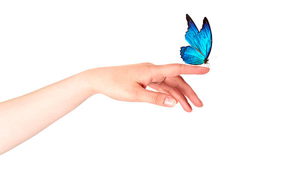 Butterfly on womans hand in motion picture id462314223?b=1&k=6&m=462314223&s=612x612&w=0&h=btcattmmnyodbqe cflc6jadjbildfe5kp2orwvl5v4=
