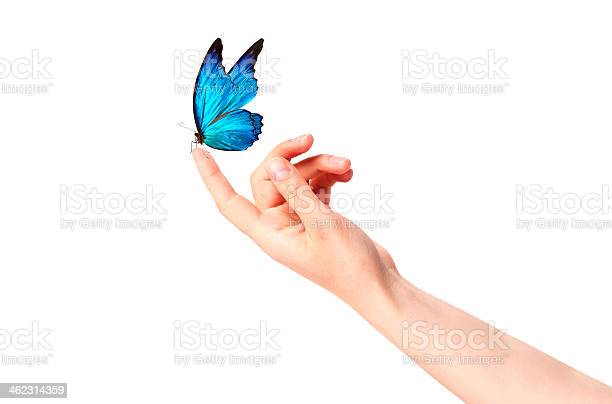 Butterfly on womans hand in motion picture id462314359?b=1&k=6&m=462314359&s=612x612&h=cxxep6enpd3kh326gbmmmmucbzwvluw2whj6hrjmim8=