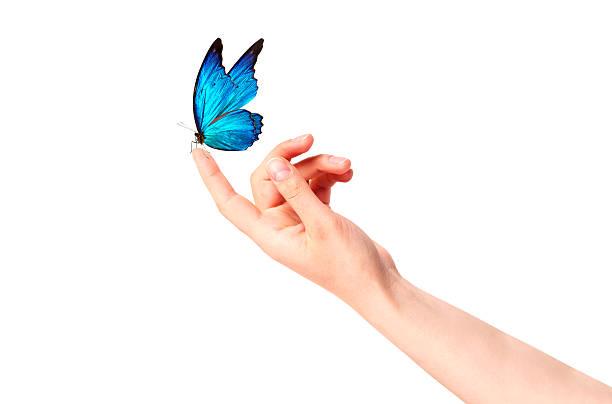 mariposa en mano de mujer.  en movimiento - mariposa fotografías e imágenes de stock