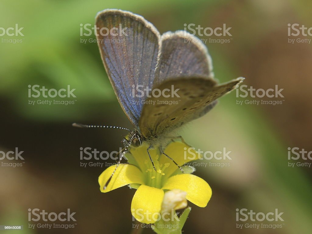 Butterfly on yellow flower royalty-free stock photo