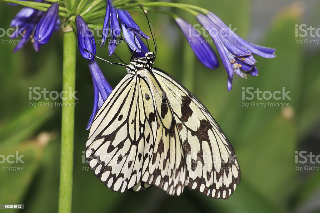 Butterfly, Paper Kite royalty-free stock photo