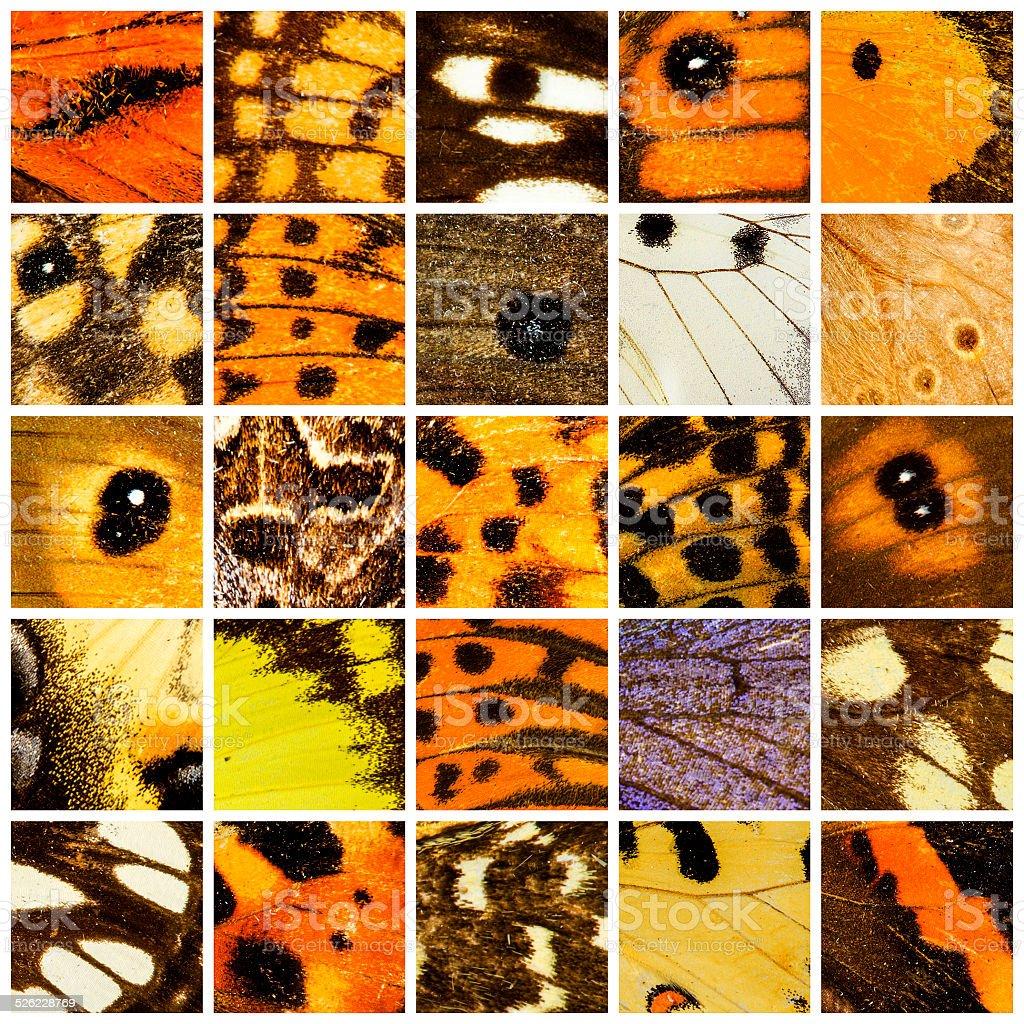 Butterfly pattern set stock photo