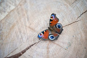 Butterfly on a wooden background.