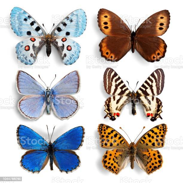 Butterfly picture id1044788290?b=1&k=6&m=1044788290&s=612x612&h=zvchxushuazyiteg7ih3v0guori56 0rsq5ighrj3m0=