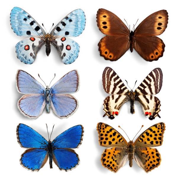 Butterfly picture id1044788290?b=1&k=6&m=1044788290&s=612x612&w=0&h=cuwishv hqopiu1mvonjfq2vw wetvsyof9gxysi7a8=