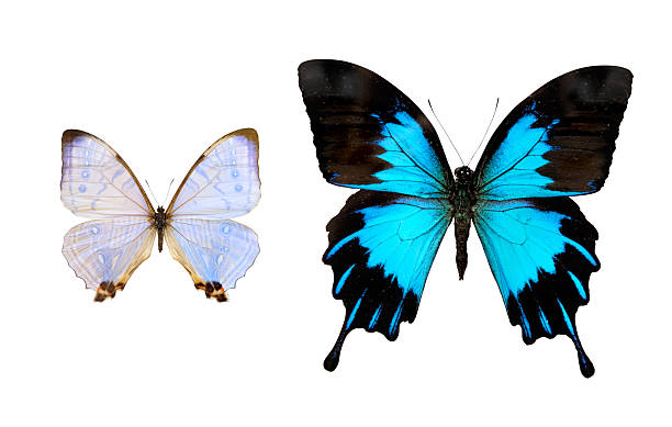 Butterfly picture id105616394?b=1&k=6&m=105616394&s=612x612&w=0&h=uvvdywcs2oi0m6amhgaguznzratt7y0mveuh3p67hm4=