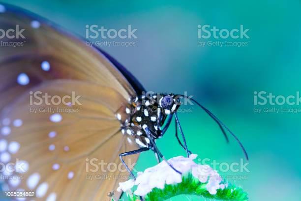 Butterfly picture id1065054862?b=1&k=6&m=1065054862&s=612x612&h=iroaznzqme0vkjgx3sdm9hf5op63grcglvpk uye3jm=